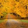 Autumn_wallpaper